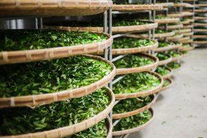 米里誌 Mini Story|抑制冠狀病毒物質台灣茶葉有辦法! 2